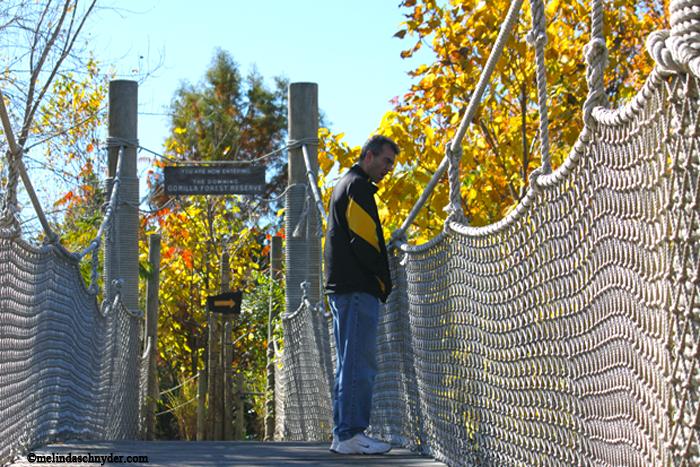 The bridge leading to the gorilla exhibit.