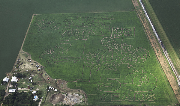 Peanuts corn maze at Reding Farm in Oklahoma