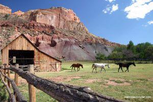 Travel_Horses_Capitol_ReefNP_Utah.jpg