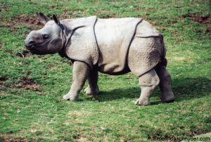 Travel_SDWP_Baby_Rhino.jpg