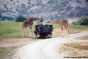 Travel_SDWP_Feed_Giraffe.jpg