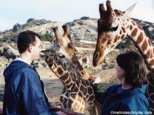 Travel_SDWP_Feed_Giraffe_Both.jpg