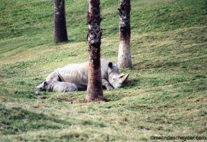 Travel_SDWP_Rhino.jpg