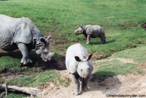 Travel_SDWP_Rhino_Fam.jpg