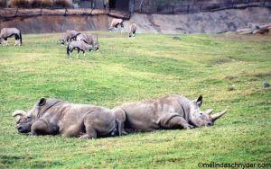 Travel_SDWP_Rhinos.jpg