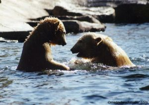 Travel_SDZ_Polar_Cubs.jpg